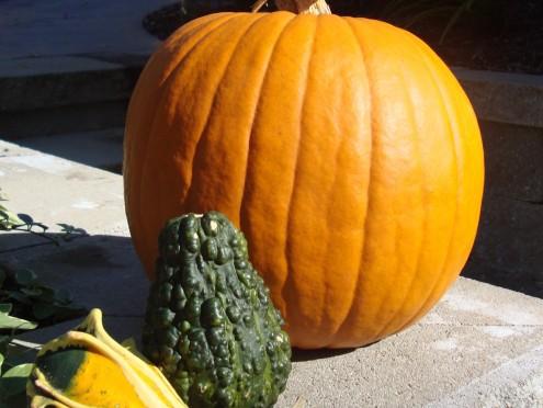 Pumpkins Abound
