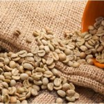 Green coffee beans help lose weight