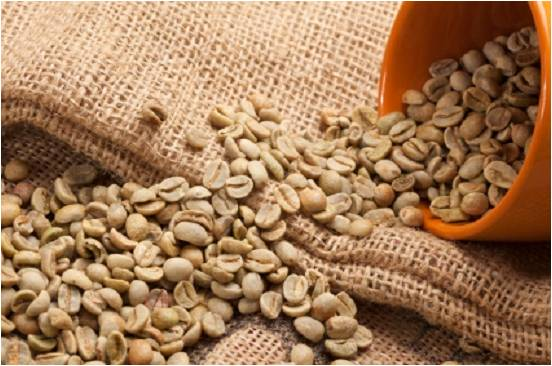 eating coffee beans for weight loss